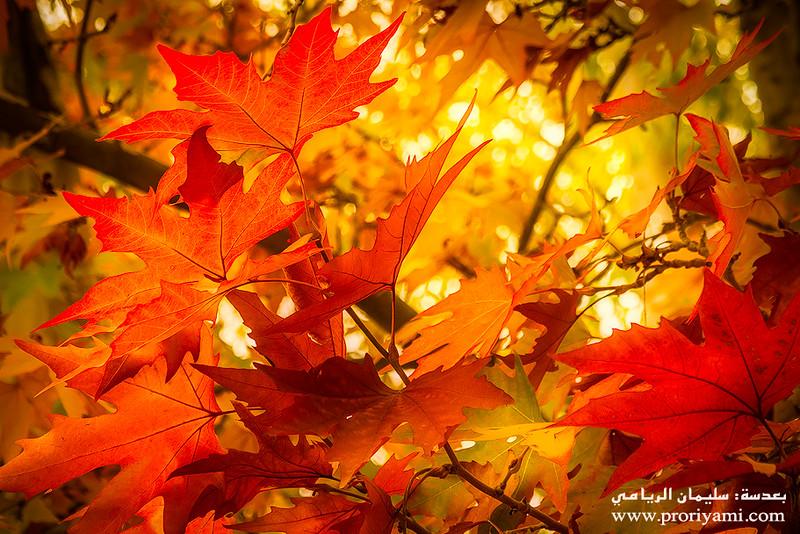 Beauty of Autumn.