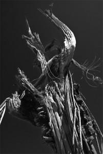 Saguaro Bones