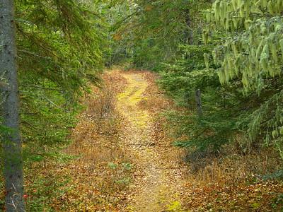 Casque Isles Hiking Trail, Lyda Bay Trail