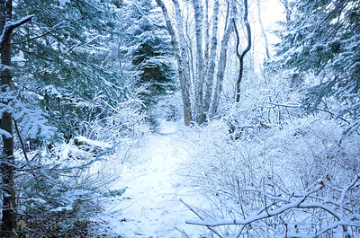 Winter Walking  Trail