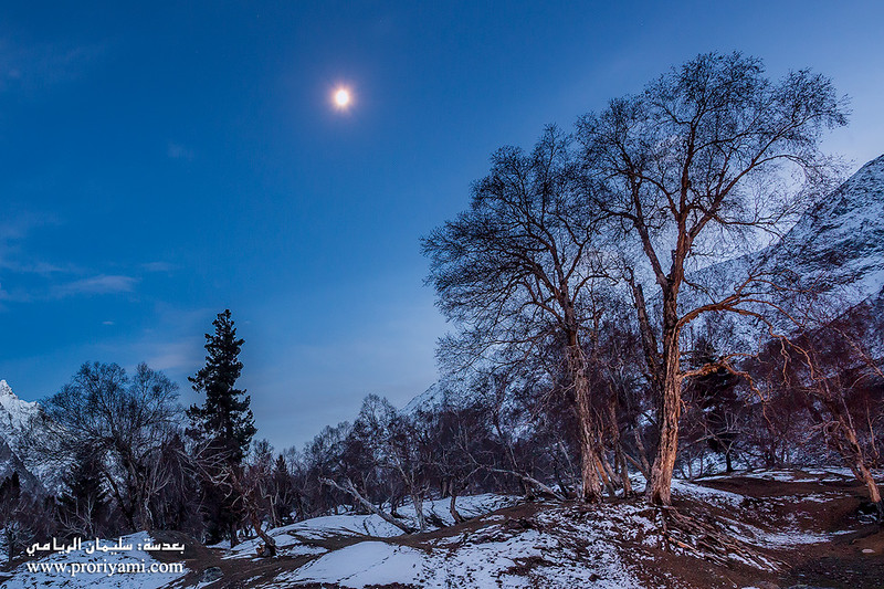 "Night shot at Naltar valley ""Pakistan""."