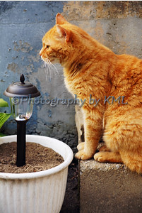a cat sitting beside a solar light