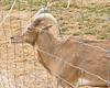 32 Big Joel's Safari Petting Zoo Sept 2019