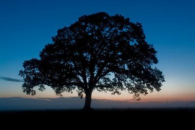 Trees 0001