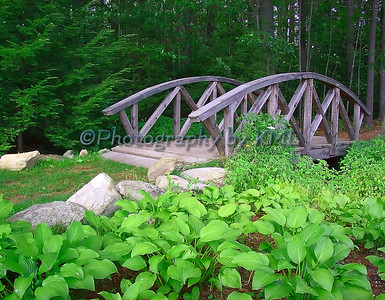 Bridge in the Woods