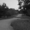 Bee Tree Road