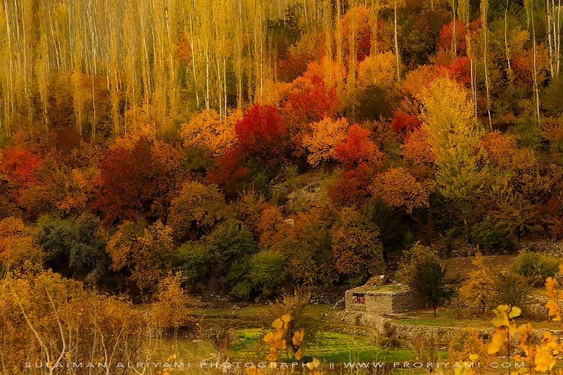 Autumn colours in North Pakistan.