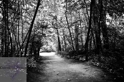 """The path This Image is © Tricia Chatterton Goldrick/Chattergold Studios.  All Rights Reserved.  No duplication without permission (see commercial downloads).  This image may be purchased from this website for blogging purposes only under """"Personal Downloads"""" This Image is © Tricia Chatterton Goldrick/Chattergold Studios.  All Rights Reserved.  No duplication without permission (see commercial downloads).  This image may be purchased from this website for blogging purposes only under """"Personal Downloads"""" This Image is © Tricia Chatterton Goldrick/Chattergold Studios.  All Rights Reserved.  No duplication without permission (see commercial downloads).  This image may be purchased from this website for blogging purposes only under """"Personal Downloads"""""""