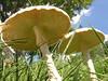 010 Mushroom Study 07