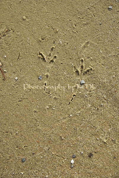 foot prints of a bird in the sand