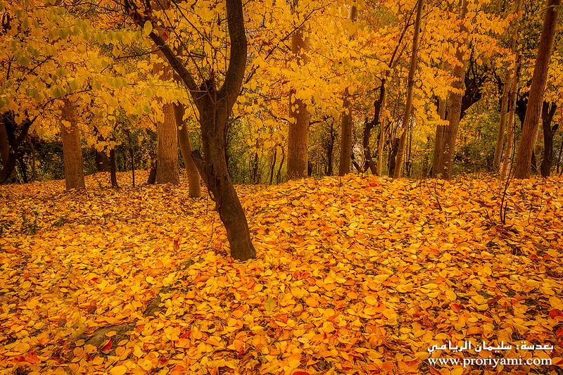 Fall season of North Pakistan.