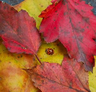 Ladybug surrounded