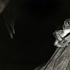 B&W red-eye tree frog copy