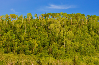 Trees Of The Boreal Forest, Rictographs Images