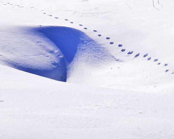 Tracks In The Snow,