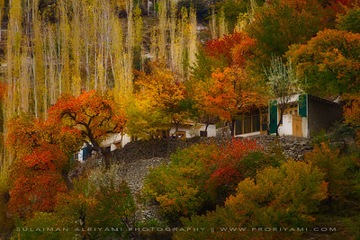 Autumn colours in north Pakistan.