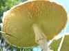 011 Mushroom Study 08