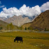 "Country side of Skardu ""Pakistan"""