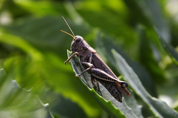 Oh, Grasshoppa.