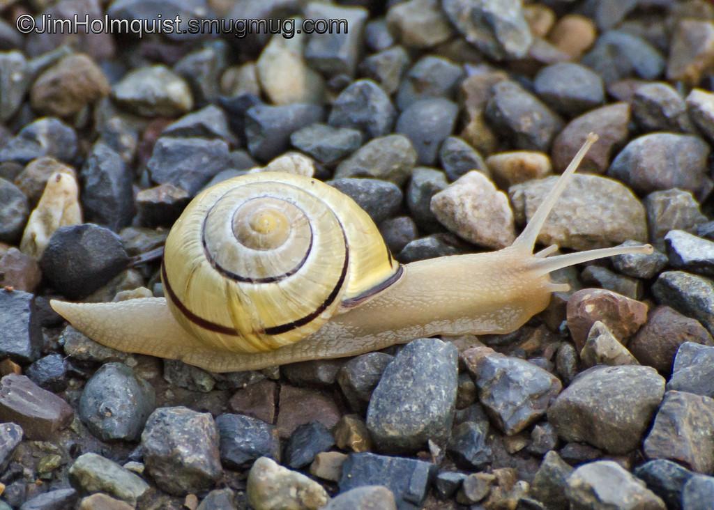 Snail - near Olympia, Wa