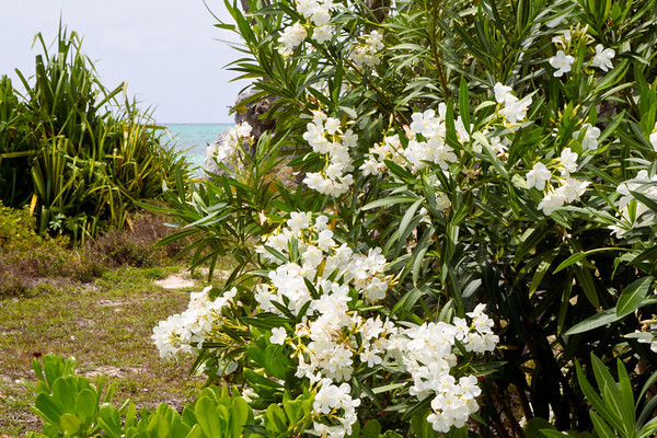 Flowers with beach in background