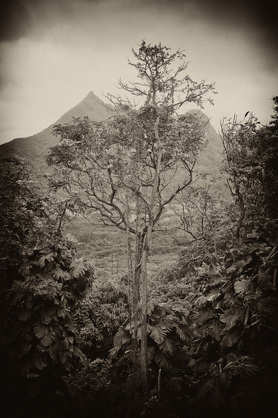 """Tree Window - Vintage"" Oahu, Hawaii. USA"
