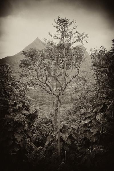 """Tree Window - Vintage"" Oahu, Hawaii. USA"