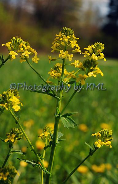 Yellow Sprig Flower