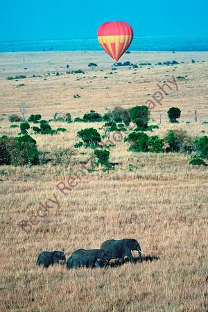 ElephantBalloon