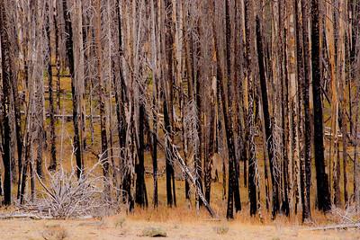 Trees 0010