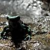 Frog Look