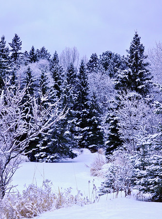 MacIntyre River,  Winter Wonderland