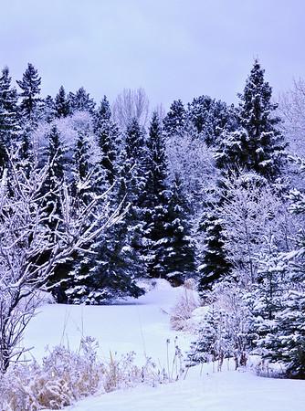 MacIntyre River,  Winter Wonderland