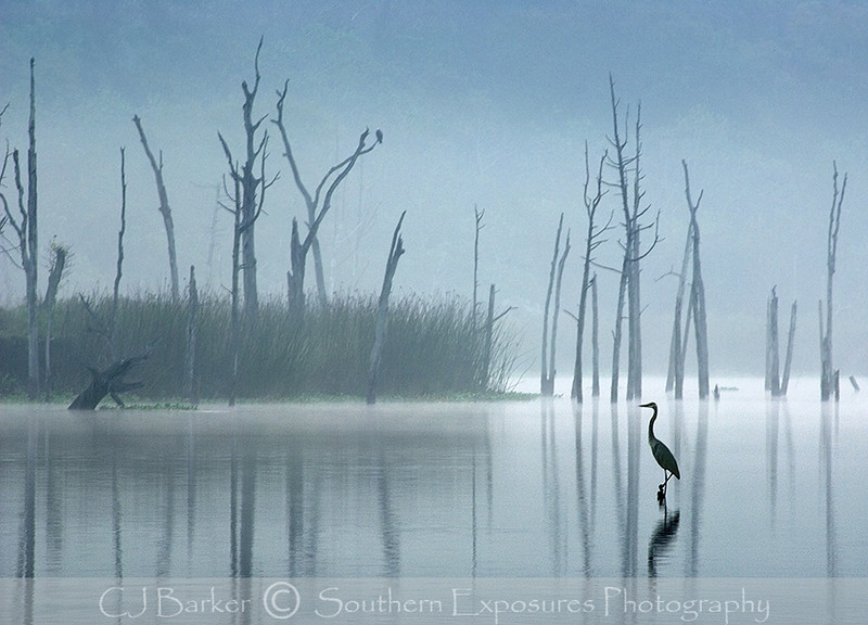 Great Blue Heron in the fog on Clear Creek at Bay Area Park near Houston, Tx.
