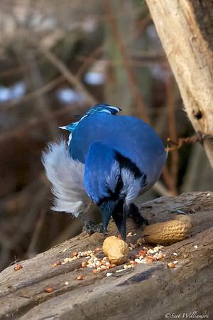 Feeding Jay