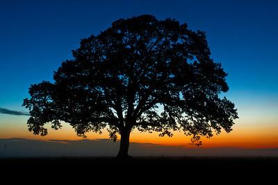 Trees 0002