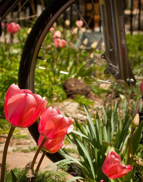 Breck Spring Fling