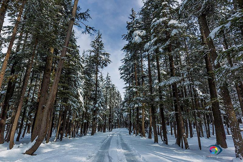 """kalam forest, swat valley """"Pakistan""""  من غابات وادي سوات الصنوبريه"""
