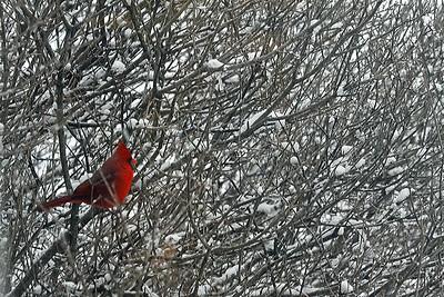 cardinal2013