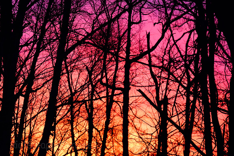 Trees, Sun Rising, Rictographs Images