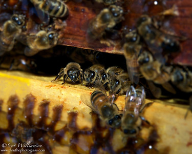 Getting Down To Bees Nest