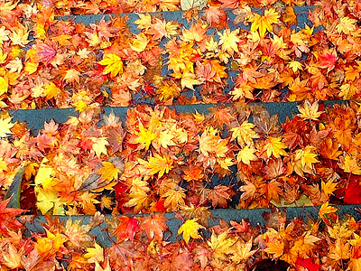 Leaves on stairs
