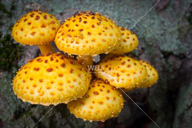 Mushrooms by mspriggs