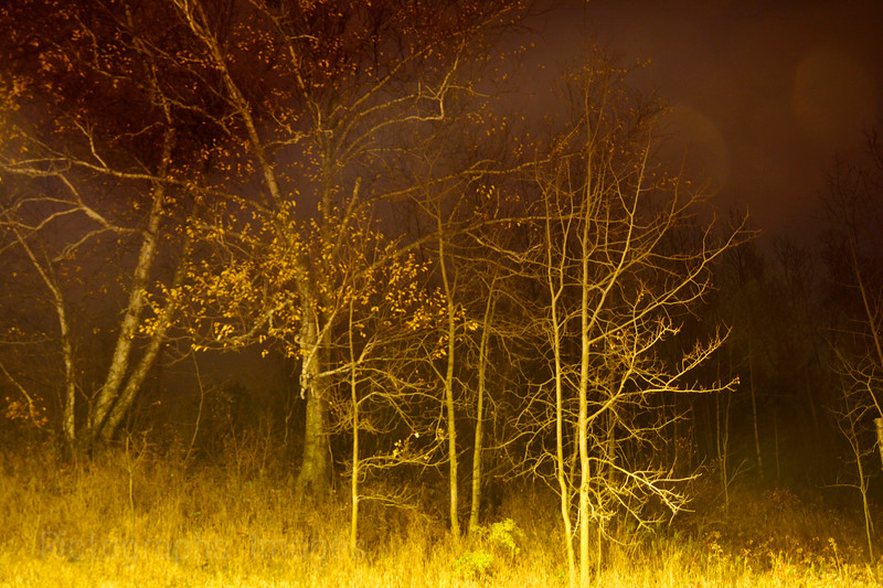 Trees In Nature, Night Photo