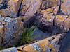 Igneous Bedrock