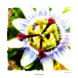 Becky's Passiflora   (LPolTear)