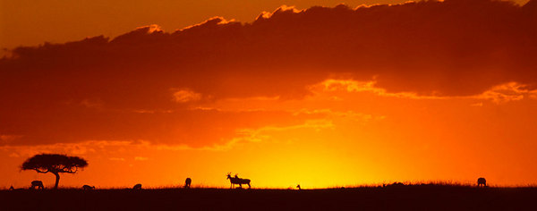 kenya sunset horizontal printed panoramic