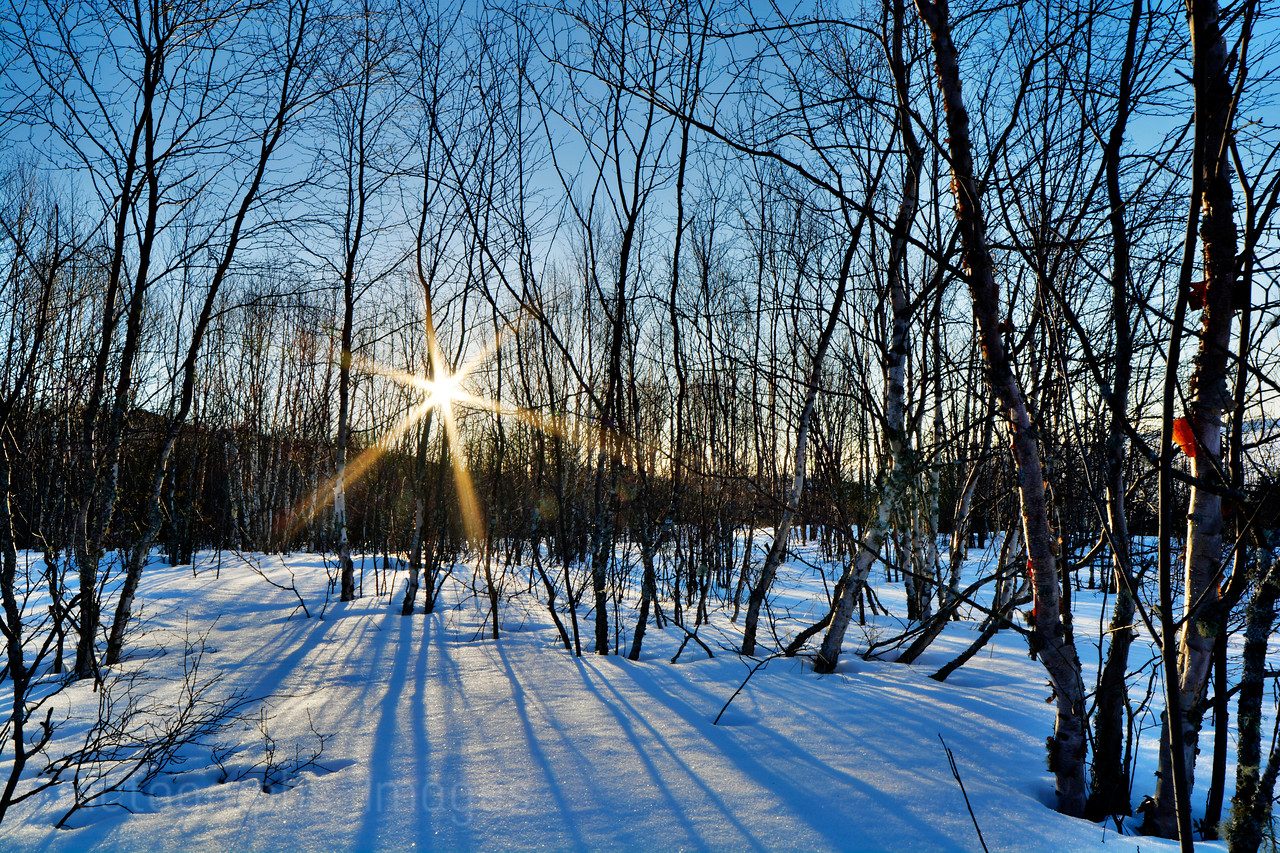 Winter Forest Sunrise