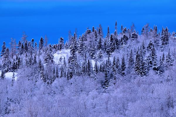 Fresh Snow On The Woods,