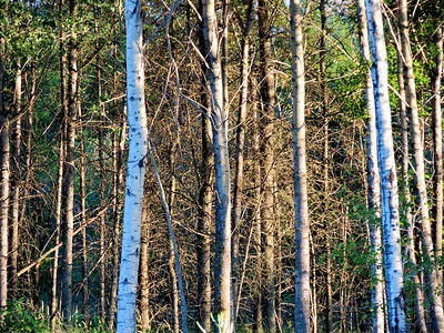 Trees of The Forest, Rictographs Images